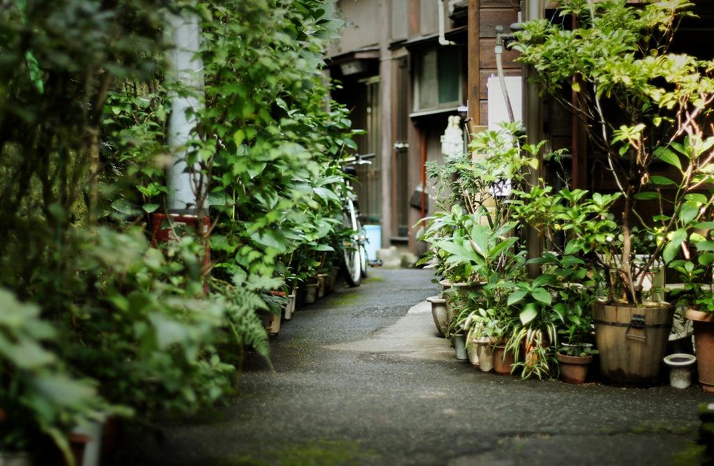 本郷 ( 4PIC )
