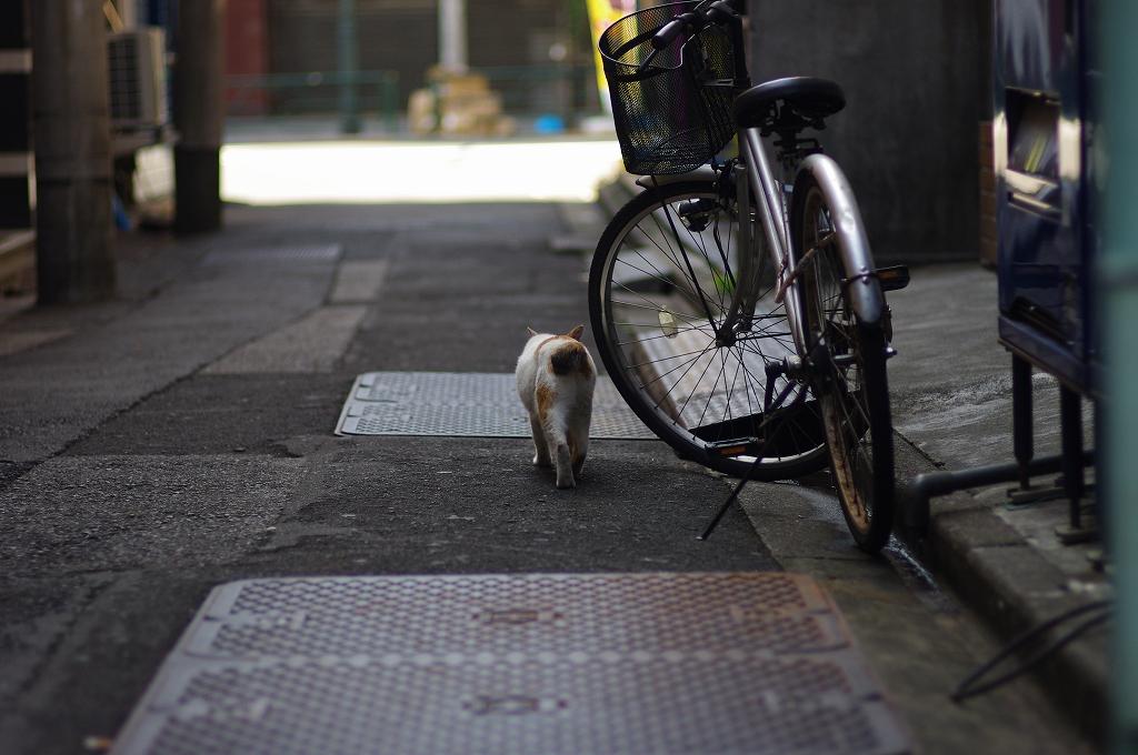 東京猫景 湯島