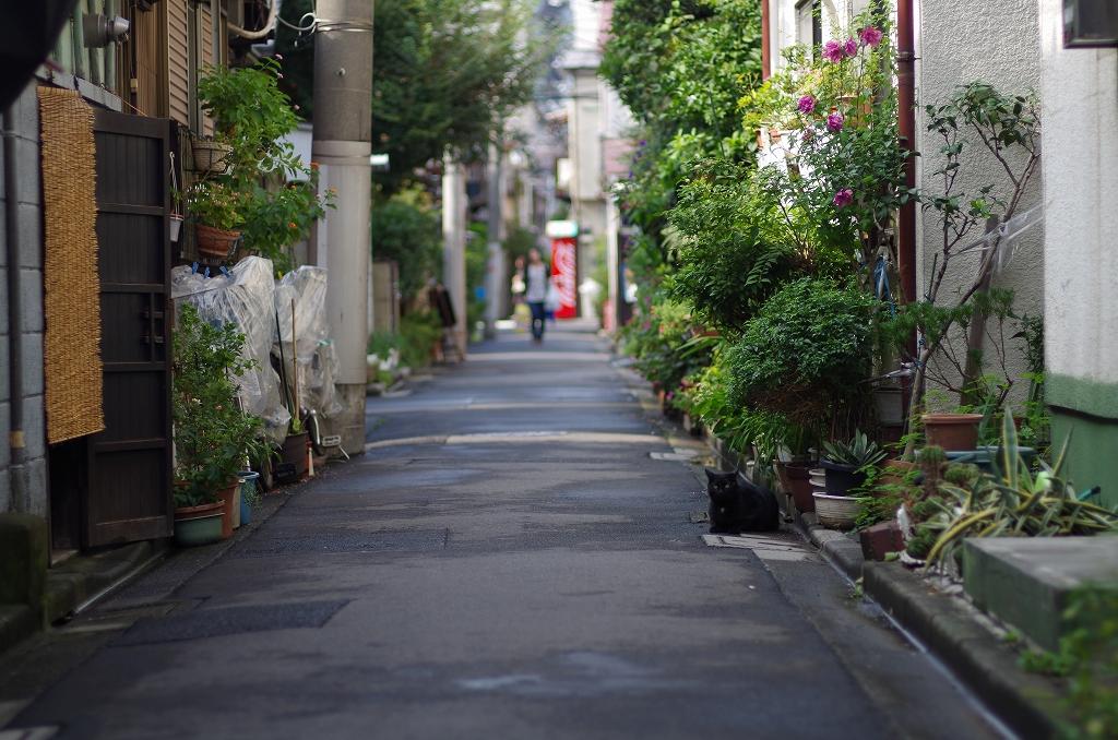 東京猫景 根津