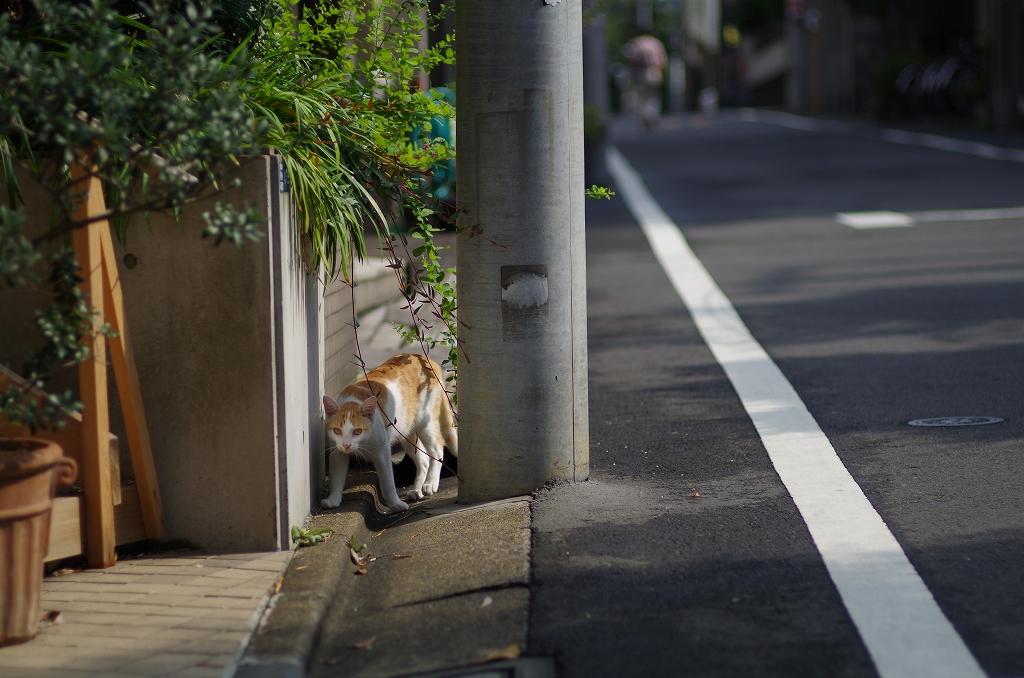 東京猫景 谷中