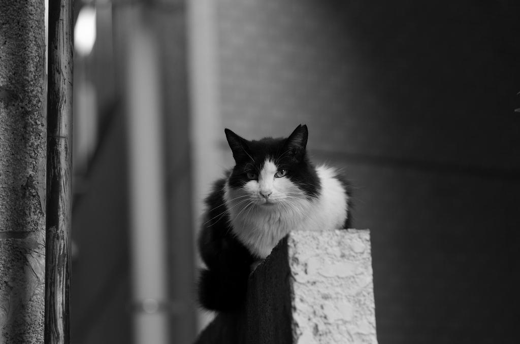 東京猫景 人形町(別カット)