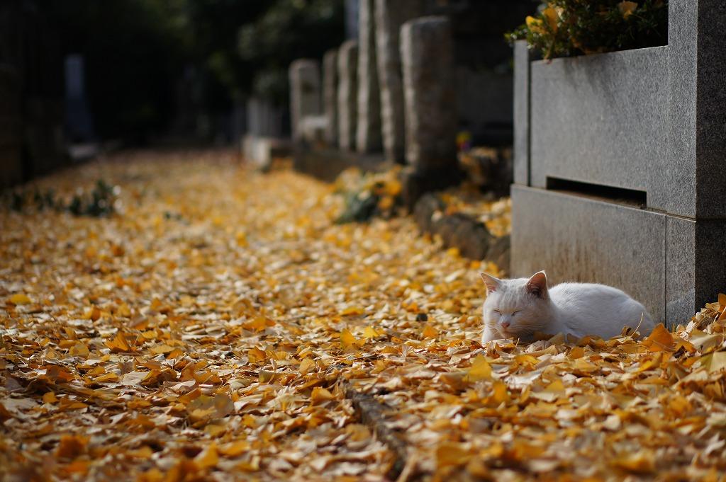 銀杏の褥(別カット)