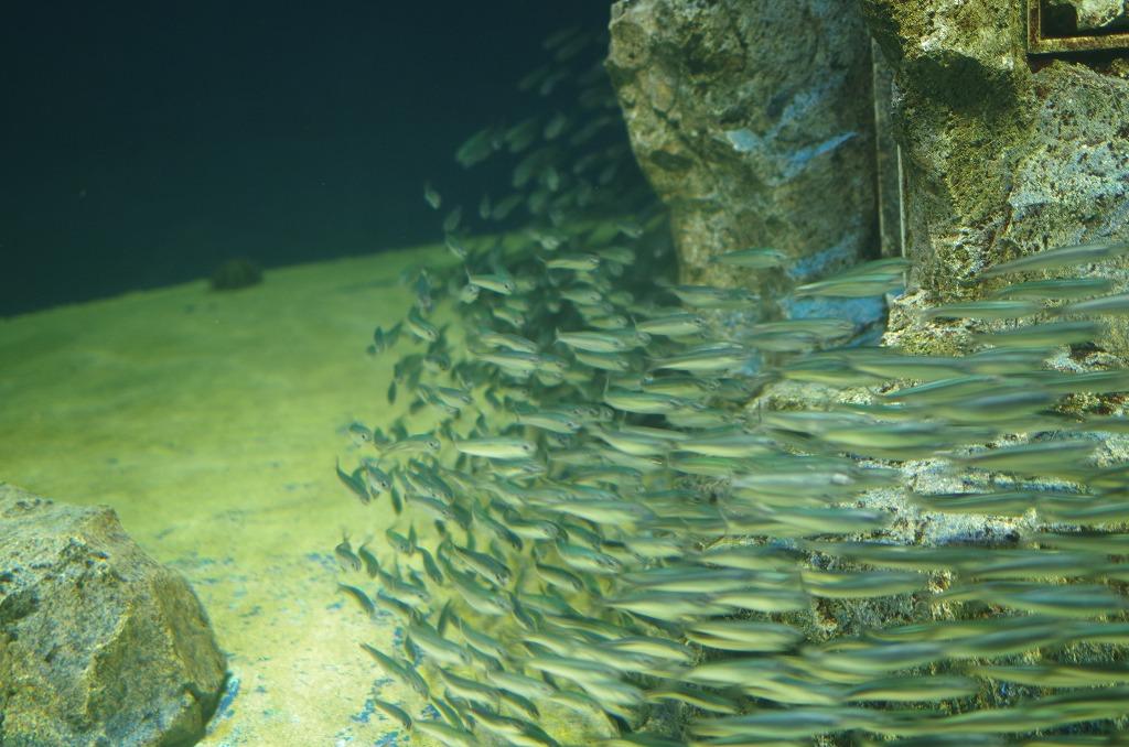 サンシャイン水族館(14PICS)