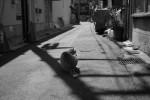 谷根千猫景