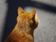 近くの路地にいた猫さん