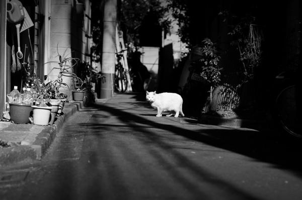 white shadow