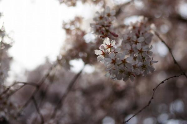 今年もまた春が来て