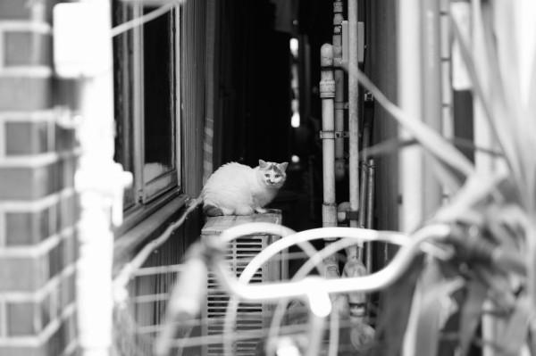 東京猫景 人形町