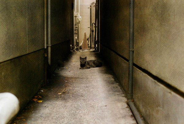 Back Street Sphinx