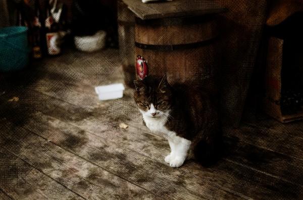 店番猫さん
