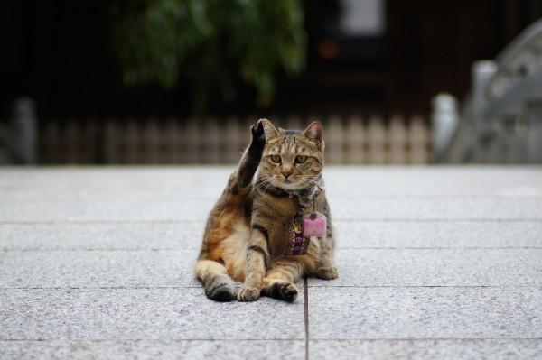 お守り猫さん
