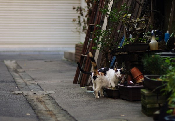 しっぽ触れ合う日本橋界隈