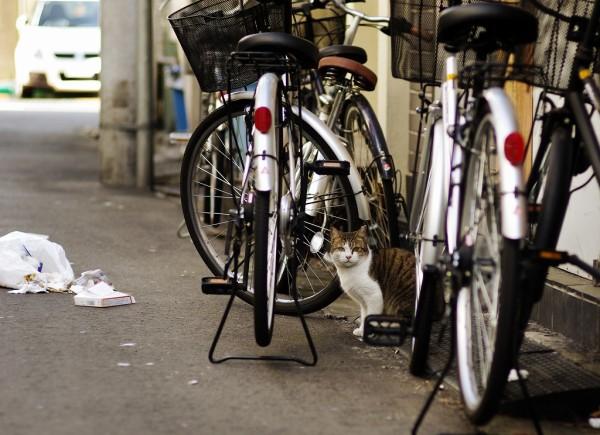 自転車の盾