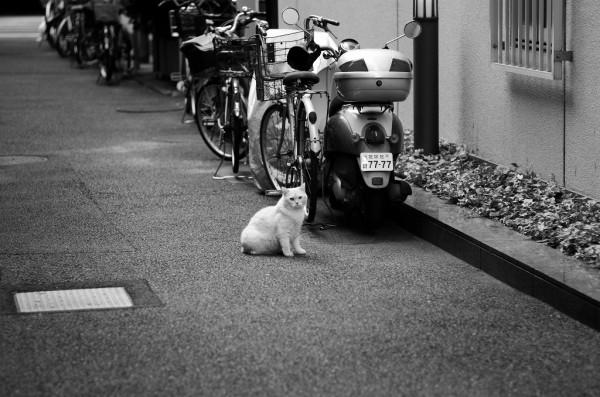 駐車駐輪駐猫