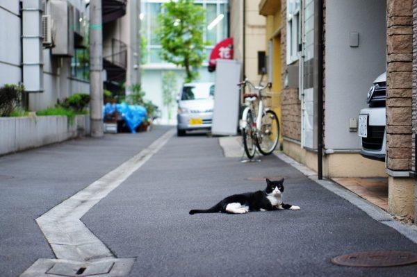 続・東京点猫