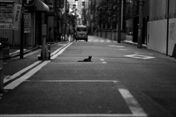 東京点猫 その1