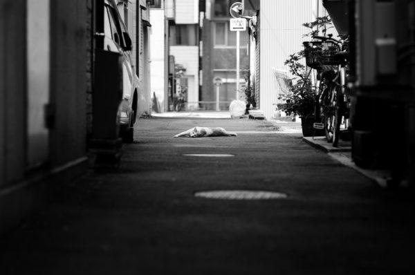 神田stray